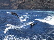 Lebenslust von Gesellschaft zur Rettung der Delphine e.V.